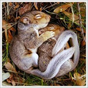 hibernation-300x300.jpg