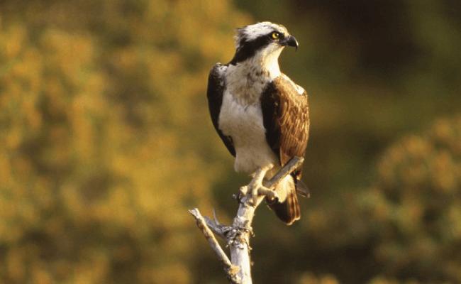 Cumbria-Wildlife-Trust.png