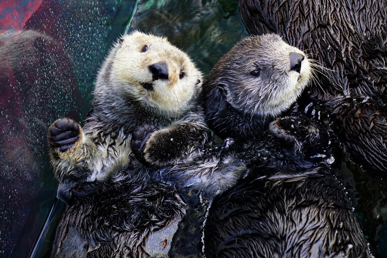 sea-otters-ivy-kit-nd15-007-1600.jpg